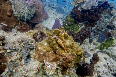 Koh Tao Scuba Diving Site South West Pinnacle -52
