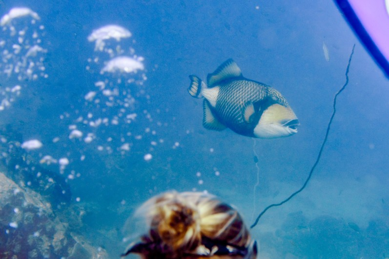 Koh Tao Scuba Diving Site South West Pinnacle -56