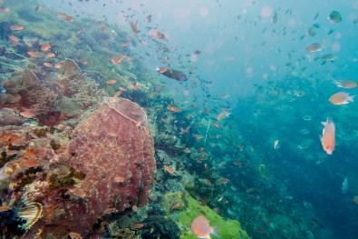 Koh Tao Scuba Diving Site South West Pinnacle -6