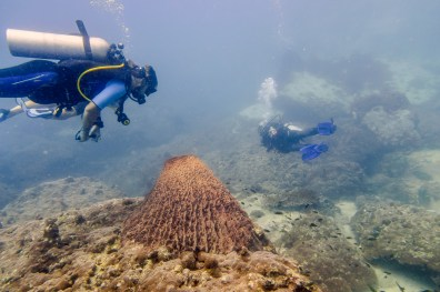 Koh Tao Scuba Diving Site South West Pinnacle -73