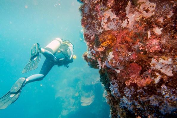 Apo Island Philipines Scuba Diving -24