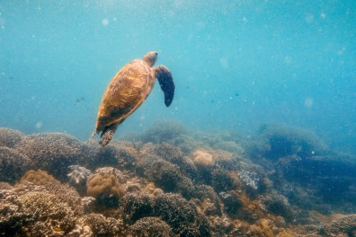 Apo Island Philipines Scuba Diving -27
