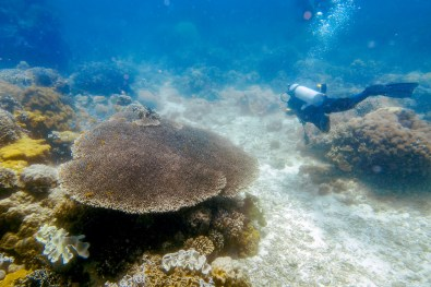 Apo Island Philipines Scuba Diving -29