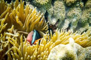 Apo Island Philipines Scuba Diving -52