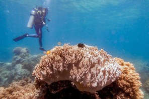 Apo Island Philipines Scuba Diving -61