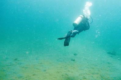 Apo Island Philipines Scuba Diving -66