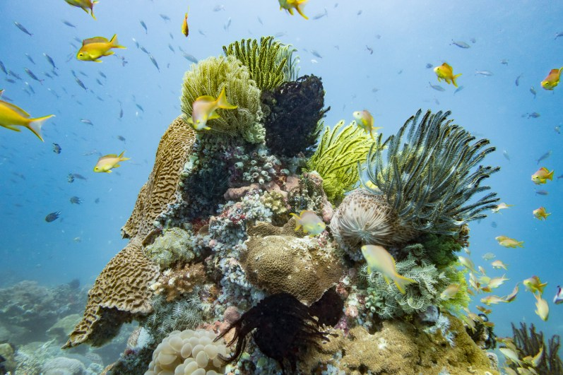 Apo Island Philipines Scuba Diving -77