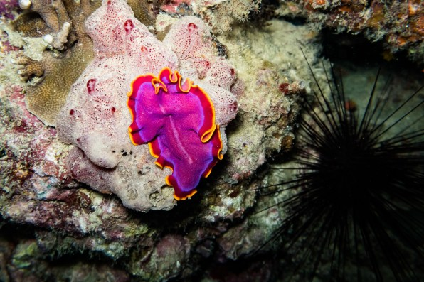 Bohol Scuba Diving -11