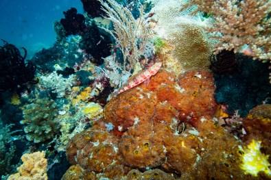 Bohol Scuba Diving -40