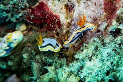 El Nido Scuba Diving -69