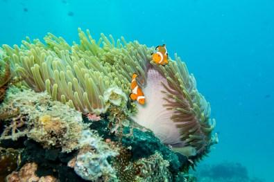 El Nido Scuba Diving -85