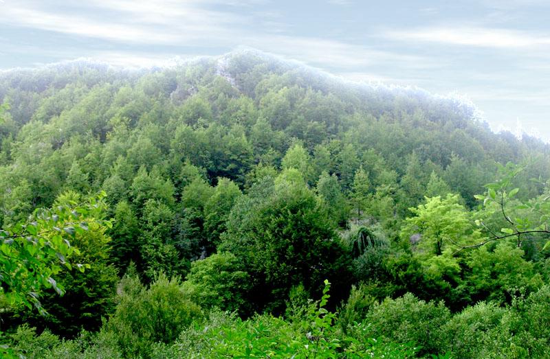 Montaña-Tara-Serbia