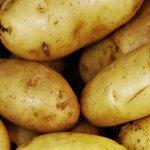 Sadan Dyrker Du Kartofler Fa Grundig Vejledning Til Kartoffeldyrkning Her