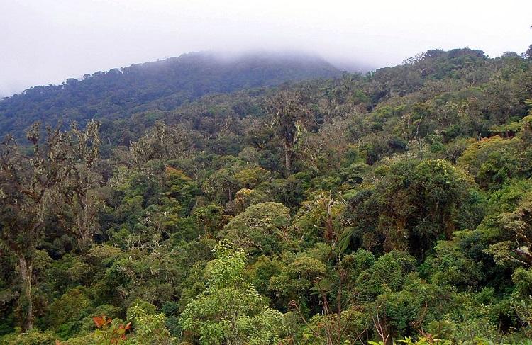 parque nacional amboro bolivia 15