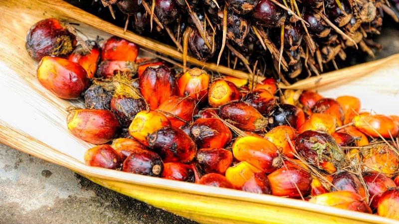 l'olio di palma fa male veramente ecco la verità
