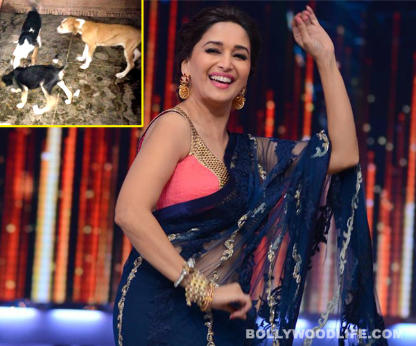 Jhalak Dikhhla Jaa 6: Madhuri Dixit-Nene saves seven pups on the sets!