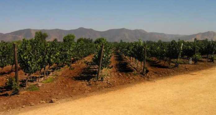 Roteiro turístico pelas vinícolas chilenas