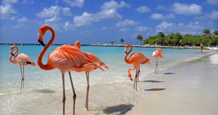 Aruba é um dos destinos mais em conta para quem quer conhecer o Caribe sem gastar muito
