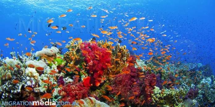Ningaloo Marine Park na Austrália