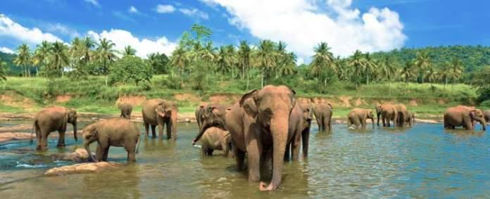 Sri Lanca é um destino africano para quem deseja viajar em fevereiro