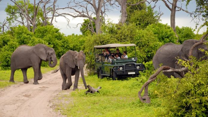 no Parque Nacional Chobe, Botsuana.