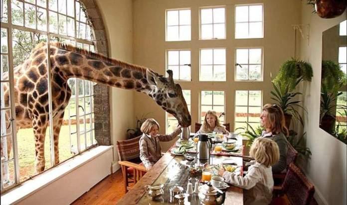Giraffe Mannor é um dos hotéis de selva