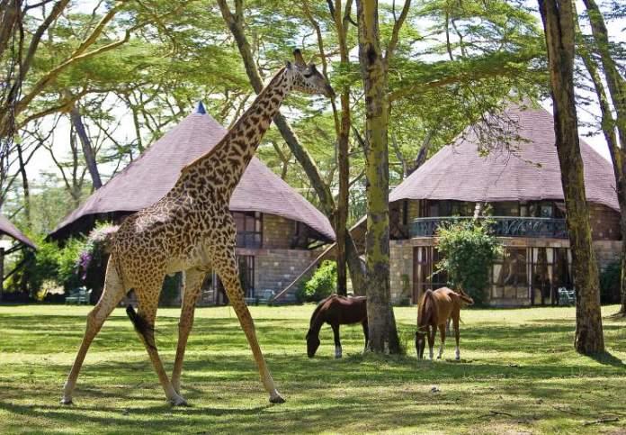 Naivasha Sopa Lodge é um dos hotéis de selva