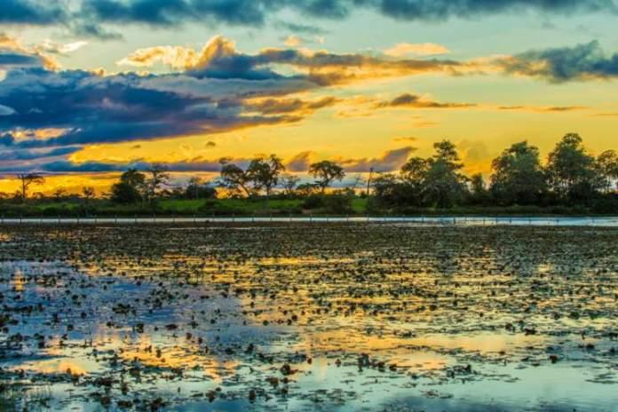 Pantanal é um dos Melhores destinos de férias no Brasil