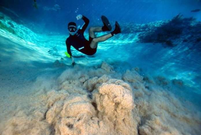 Passeio de flutuação no Rio da Prata é uma das dicas de o que fazer em Bonito