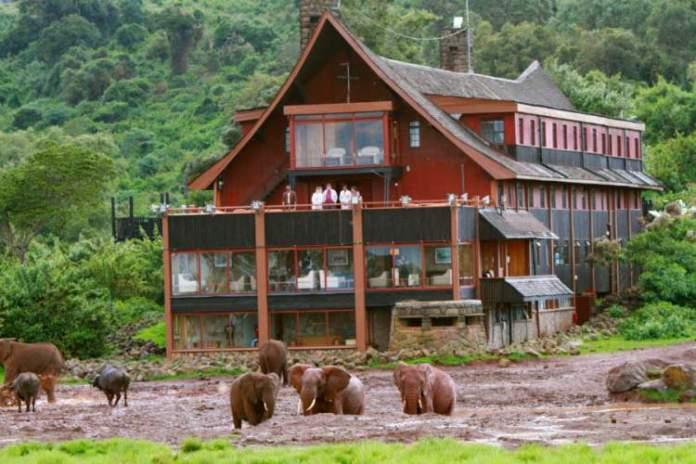The Ark é um dos hotéis de selva