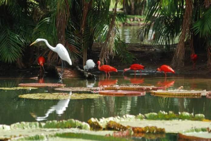 Visitar o Parque Ecológico Mangal das Garças é uma das opções de o que fazer em Belém