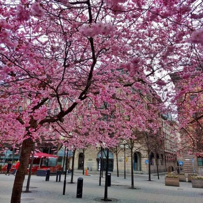 Estocolmo na Suécia é um dos lugares que possui as mais belas ruas floridas do mundo