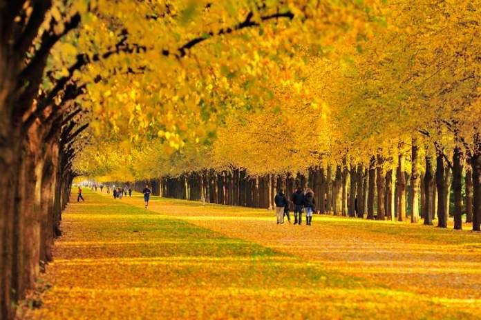 Hannover na Alemanha é um dos lugares que possui as mais belas ruas floridas do mundo