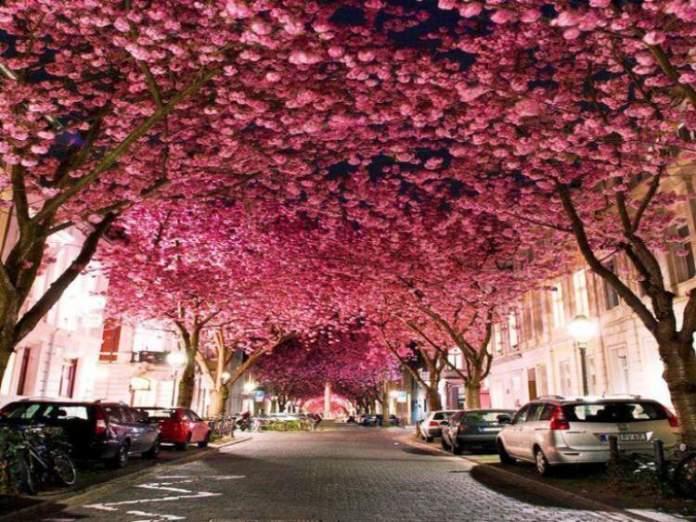 Ruas de Bonn na Alemanha é um dos lugares que possui as mais belas ruas floridas do mundo
