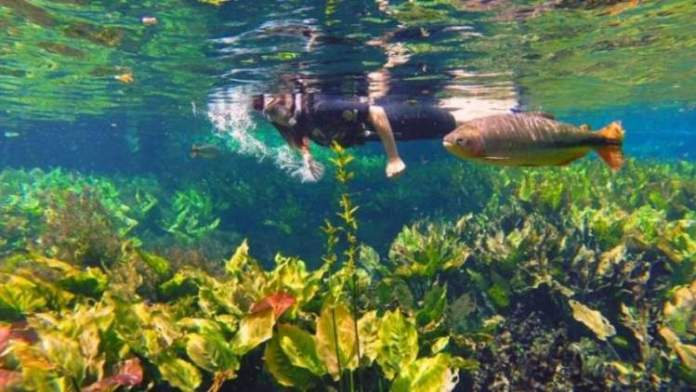 Aquário Natural em Bonito MS