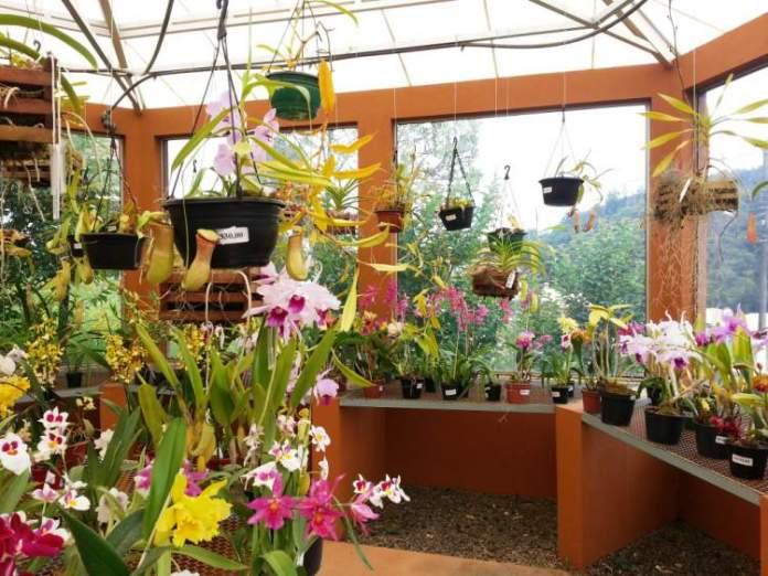 Conhecer o Orquidário é uma das dicas de o que fazer em Monte Verde