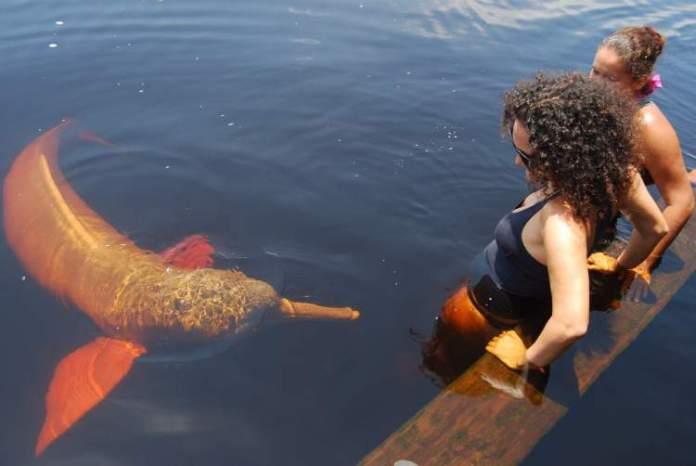 Nadar com os Botos é um dos melhores pontos turísticos do Amazonas