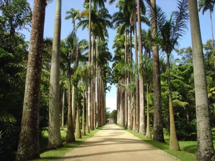 O que fazer no Rio de Janeiro: Visitar o Jardim Botânico