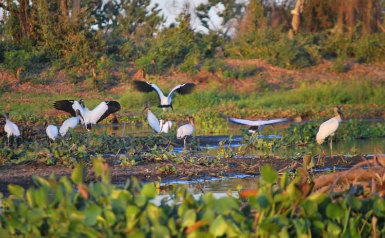 Pantanal em Mato Grosso do Sul