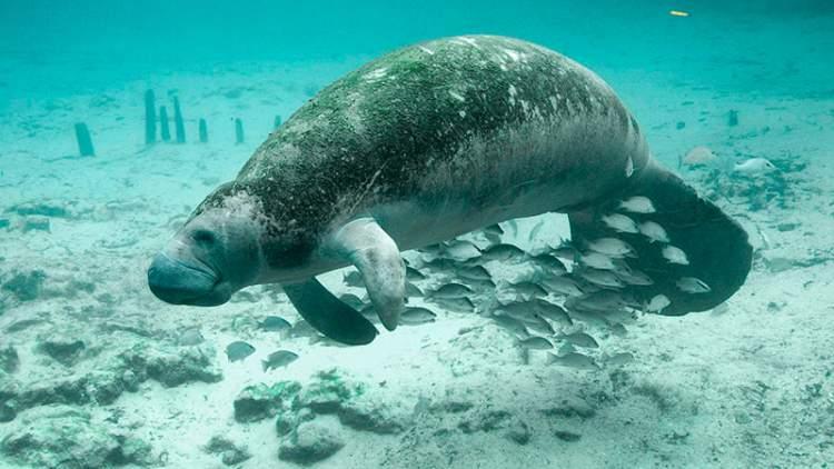 Porto das Pedras é um dos destinos no Brasil para ver animais em estado selvagem