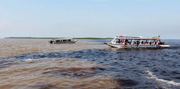 Rio Negro é um dos destinos no Brasil para ver animais em estado selvagem