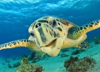 destinos no Brasil para ver animais em estado selvagem capa