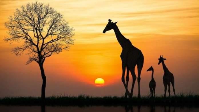 África do Sul é um dos melhores destinos para viajar em Junho