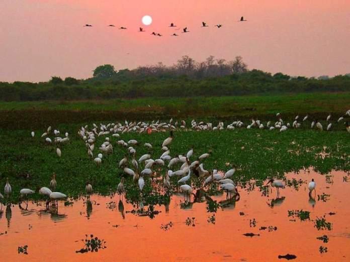 Pantanal é um dos destinos turísticos e baratos no Brasil