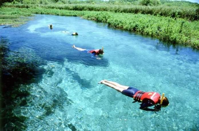 Rio Sucuri em Bonito, Mato Grosso do Sul é um dos lugares com águas cristalinas no Brasil