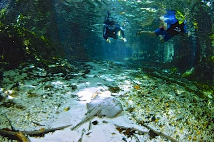 Rio Triste no Mato Grosso é um dos lugares com águas cristalinas no Brasil