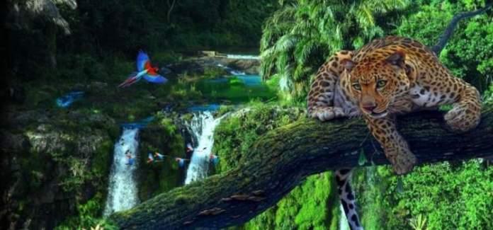 Amazônia é um dos melhores destinos turísticos do mundo