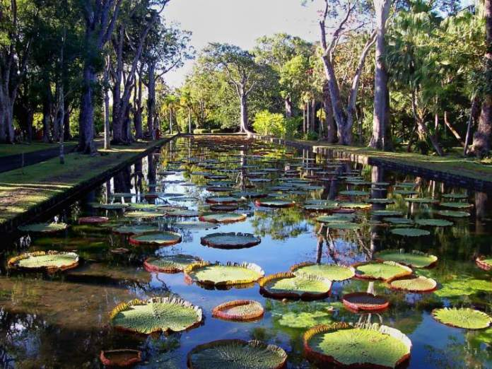 Botanic Garden Ilhas Maurício