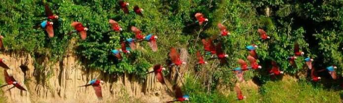 Melhor época para ir ao Peru e conhecer a Selva Amazônica