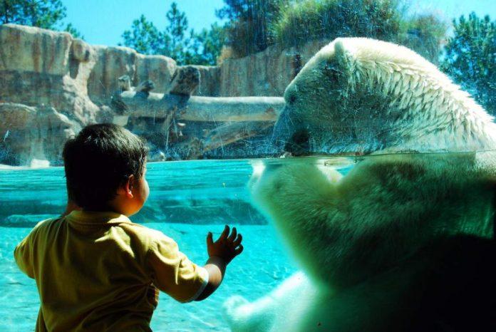 Criança admirando urso no zoológico em San Diego, Califórnia